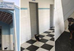 Cachorro fica três dias na porta de hospital esperando a dona