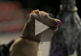 Cachorros invadem sala de cinema em São Paulo