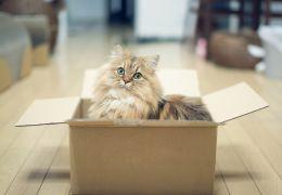 Dicas para cuidar do gato durante mudança de casa