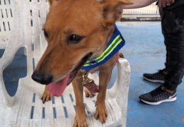 Projeto que transformar cães de rua em guardiões
