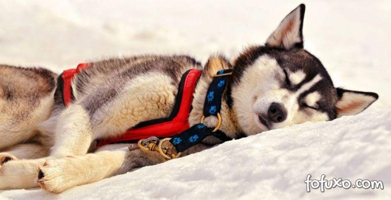 """Entenda porque o seu cachorro """"corre"""" quando está sonhando"""