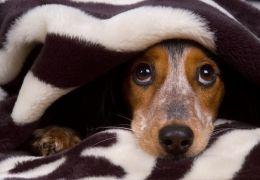 Saiba como ajudar cachorros com medo de trovões
