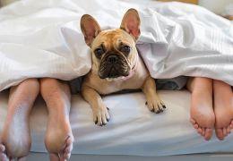 Saiba se dormir com cachorro no quarto atrapalha o sono