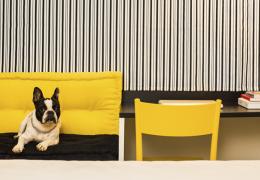 Famosa rede de hotéis passa a aceitar cães