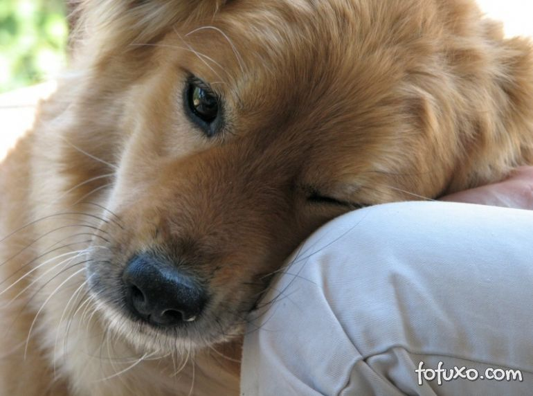 Estudo explica o amor que os cachorros sentem pelos donos