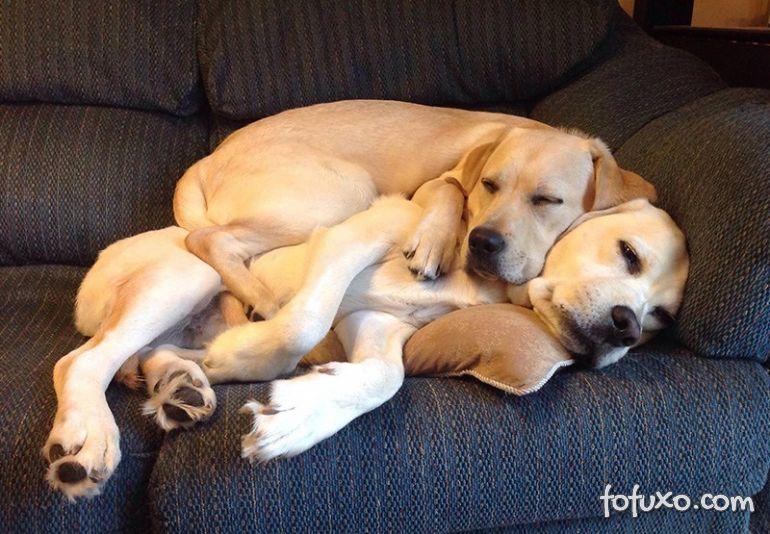 Por que os cachorros dormem tanto?