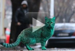 Gato verde: verdade ou mentira?