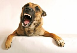 Cachorros podem sentir raiva ou indiferença dos seus donos