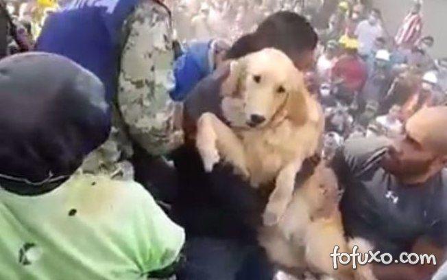 Pessoas se emocionam com resgate de cão após terremoto do México