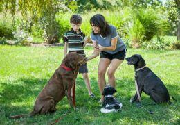 Confira alguns cuidados necessários com os cães em casas com crianças