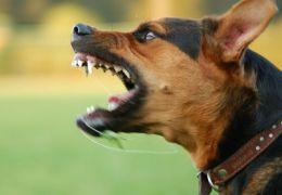 Você sabe o que irrita os cães?