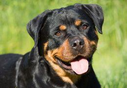 Coisas que os cães conseguem sentir antes mesmo de acontecerem