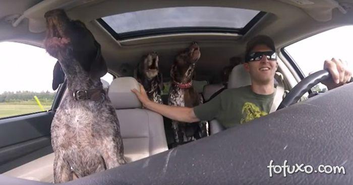 Cachorros ficam eufóricos ao saber que vão para o parque