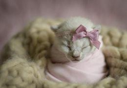 Fotógrafa faz ensaio newborn com cães e gatos