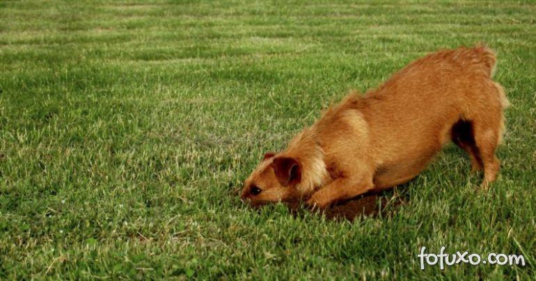 Dicas para fazer o cão parar de cavar o jardim