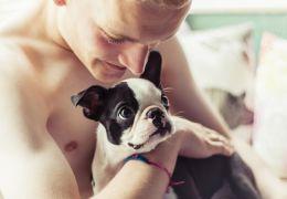 Como tratar a epilepsia em cães