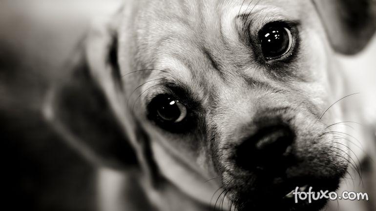 Dicas para ajudar o cachorro quando ele perde um amigo