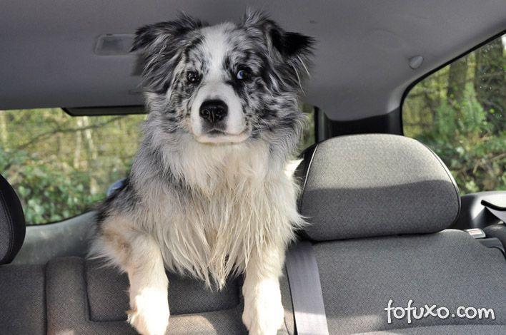 Dicas para o cachorro não enjoar no carro