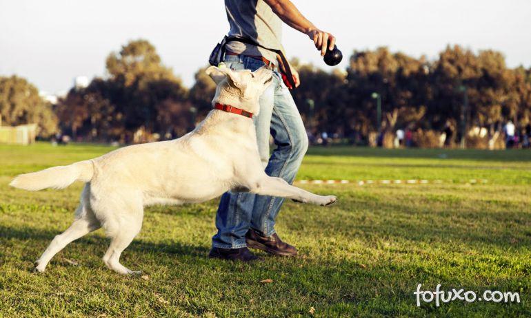 Estudo indica que cães interagem melhor com humanos do que com outros cães