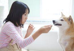 Dicas para o cachorro gostar de escovar os dentes