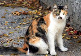 Dicas para deixar o seu gato sair de casa
