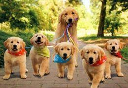 Confira os nomes de cães mais comuns em 2017