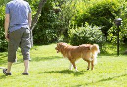 Por que os cachorros seguem os seus donos?