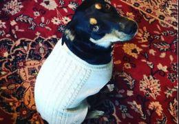 Cachorro finge que está doente para que os donos fiquem em casa