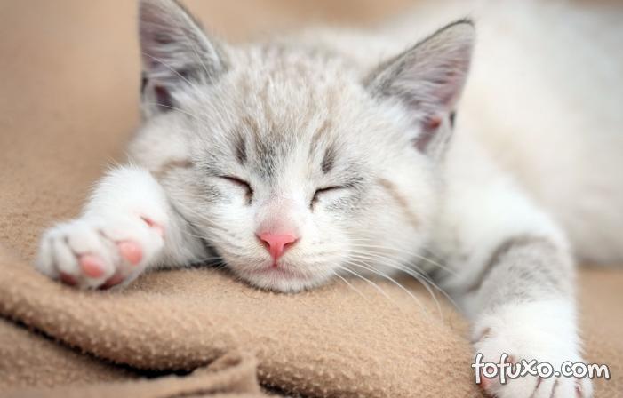 Por que os gatos dormem tanto?