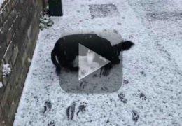 Cachorro comemora chegada da neve