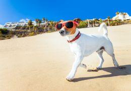 Dicas para cuidar do seu pet no verão