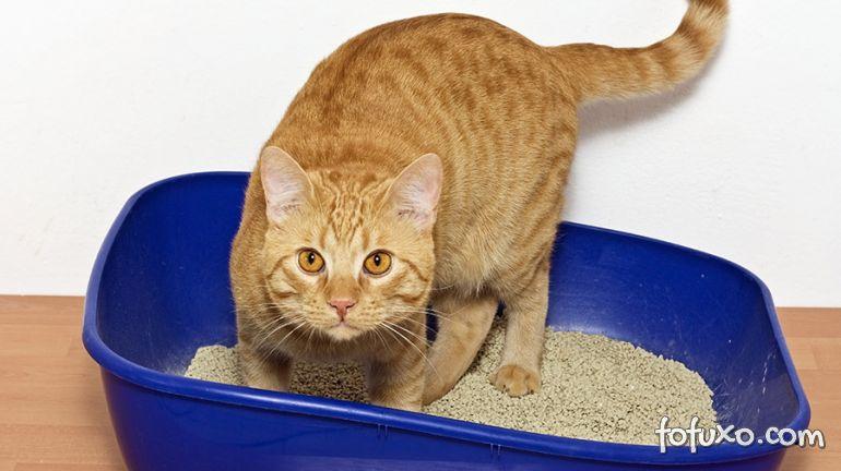Como definir o tamanho da caixa de areia do seu gato?