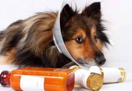 Conheça algumas das doenças mais comuns entre cães e gatos