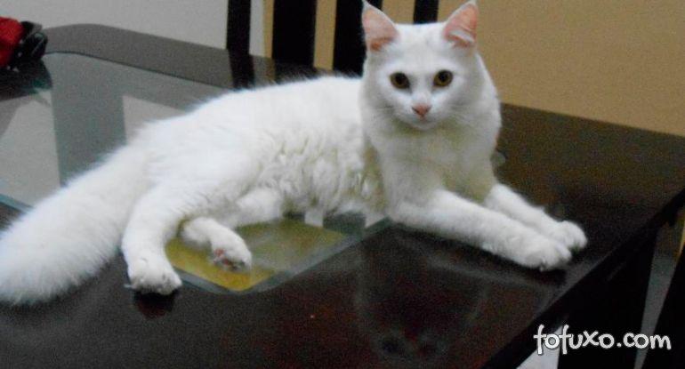 Saiba como evitar que o gato suba na mesa
