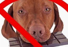 Entenda os perigos de doces e chocolate para os cães