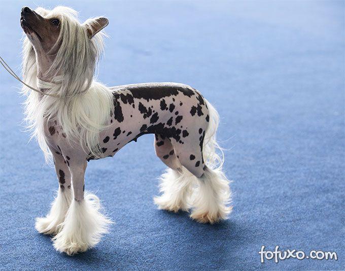 Confira raças de cachorros para donos preguiçosos