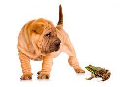 Sapos podem ser perigosos para cães?