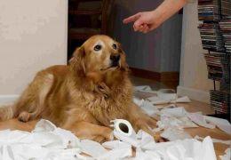 Punição agressiva: entenda os problemas que ela traz para os pets