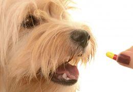 Filme oral facilita na hora de dar remédios para os cães