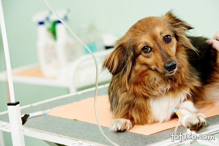 Tratamentos para parada cardíaca em cães