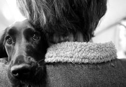 Saiba o que significa se o seu cão te segue o dia inteiro
