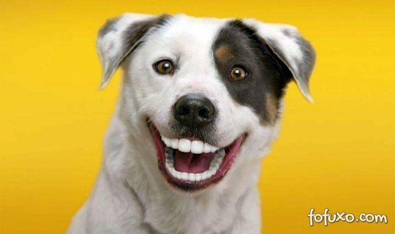 Dicas para evitar o tártaro nos cães