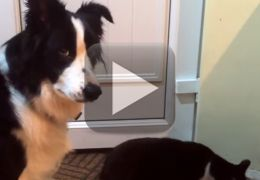 Cachorro tenta recuperar comida roubada por gato