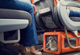 Como viajar com o cachorro na cabine do avião