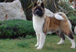 Dicas de raças de cães para quem tem alergia a pelos