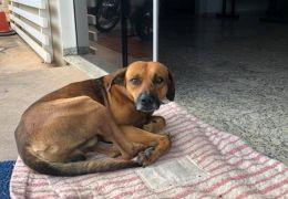 Cachorro espera na frente do hospital há quatro meses por dono falecido