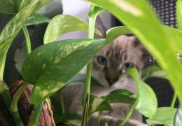 Saiba como ter plantas e gatos no mesmo espaço