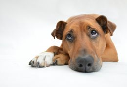 Cachorro morre após viajar em compartimento de bagagem de mão em avião