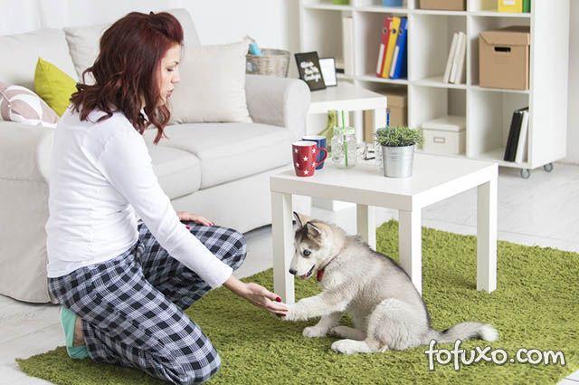 Confira algumas dicas de decoração para donos de cães