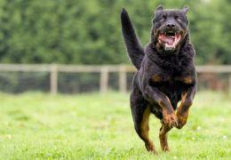 Entenda o que leva um cachorro a ser mais agressivo que outro